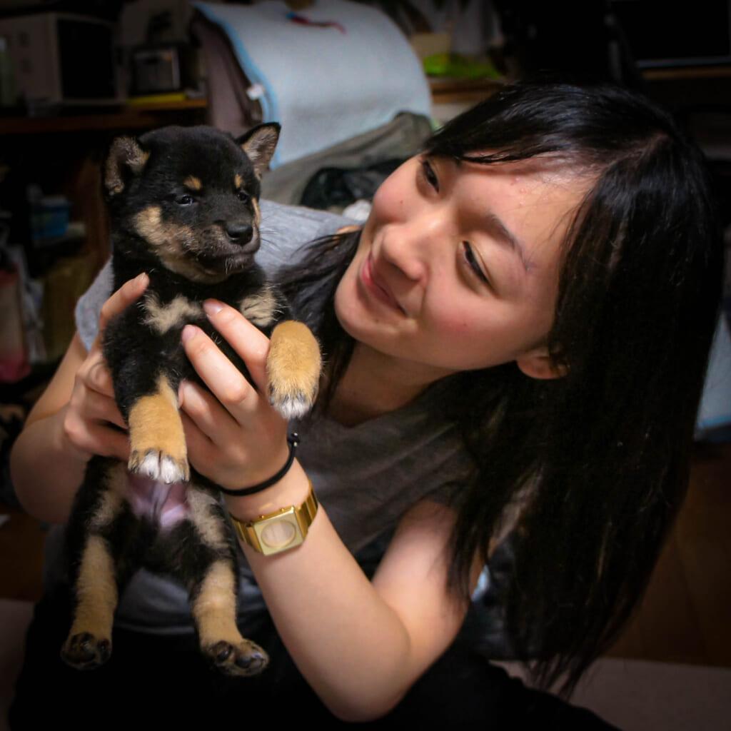 Der Shiba Inu Kuro als Welpe.