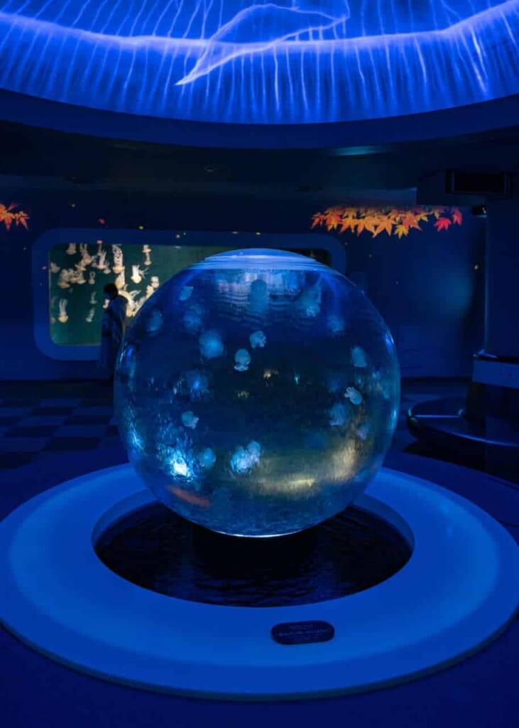 Ein Aquarium mit Quallen.