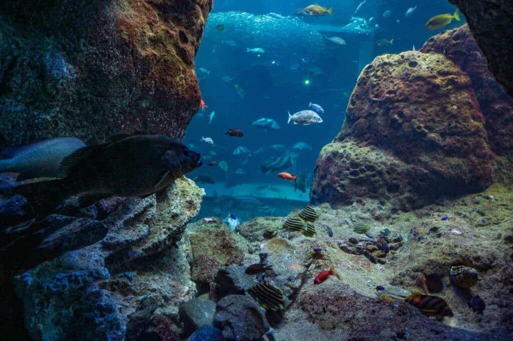Lokale Fischarten im Aquarium.