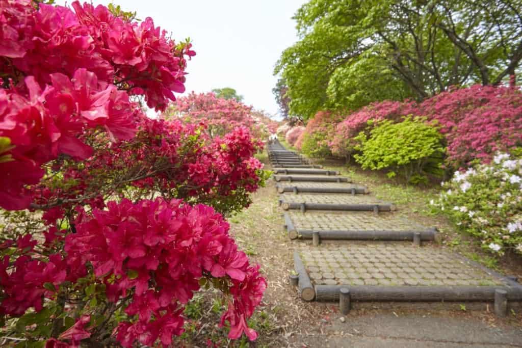 Japanische Gärten: Der Kairaku Garten ist beannt für seine Pflaumenblüte.
