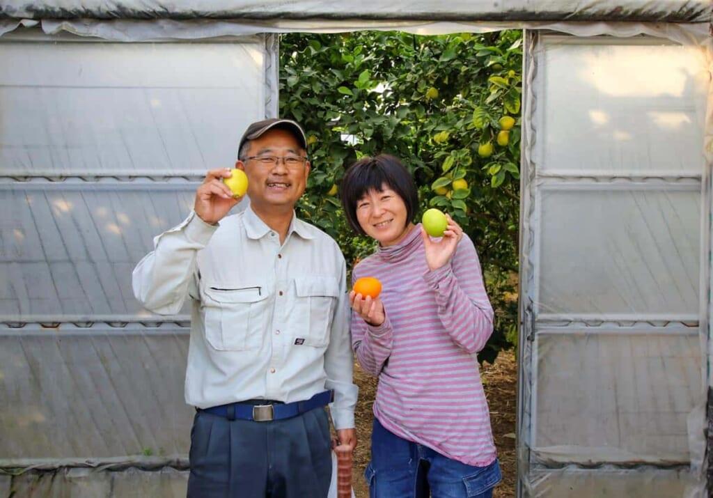 Zitronenernte auf der Okano Farm.