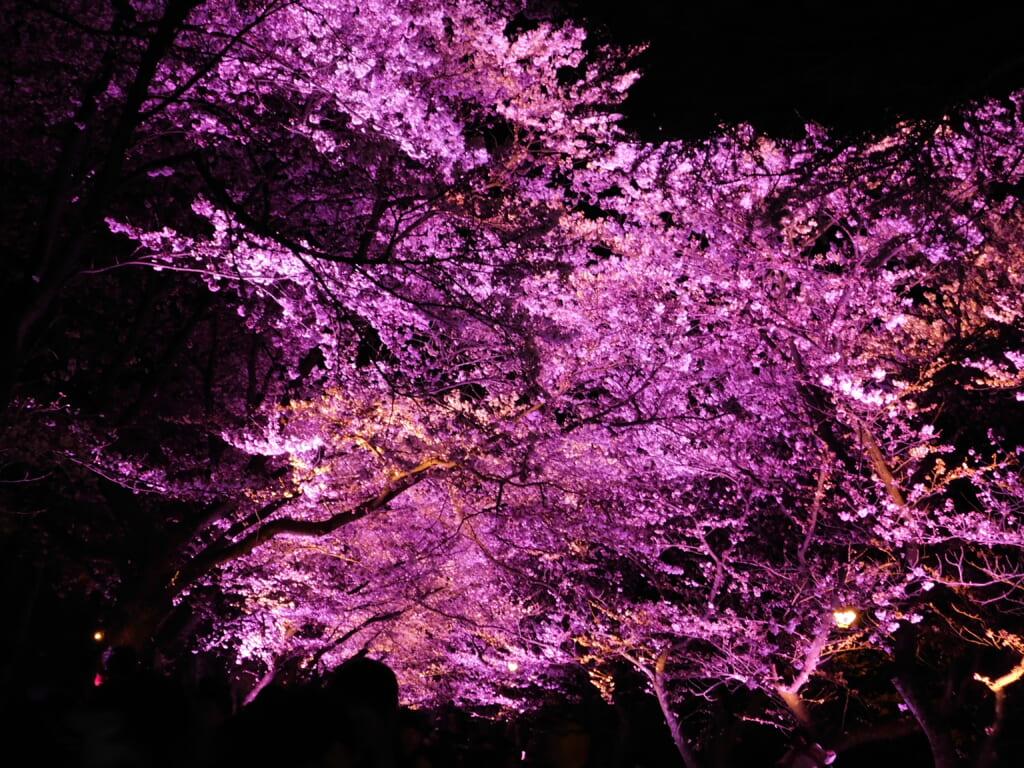 Der Takada Burgruinenpark gehört zu den 100 besten Orten für die Kirschblüte in Japan.