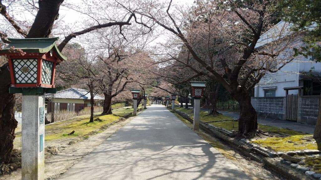 Kirschblüte in Japan: Der Eingang zum Yahiko-Park.
