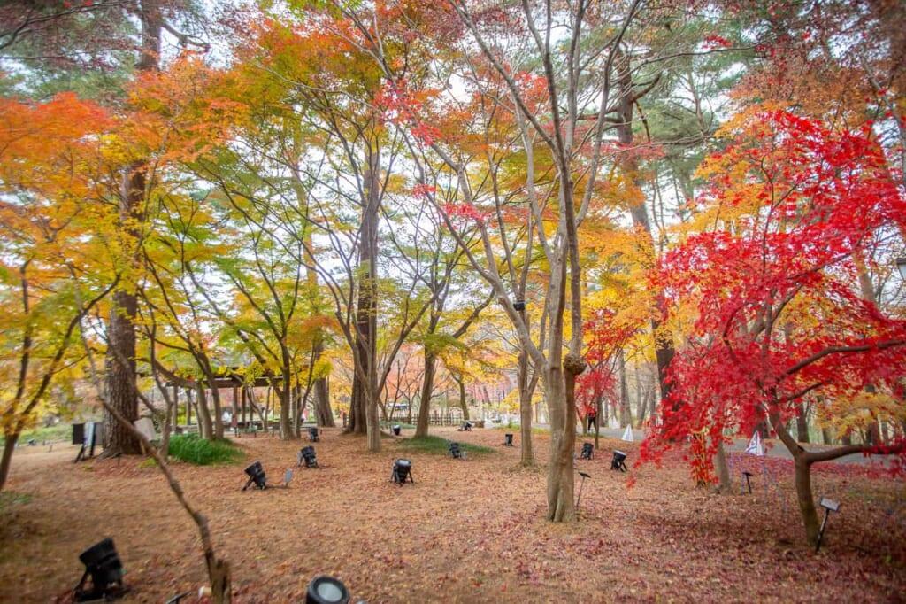 Der Musashi Kyuryo Park der Nationalregierung.