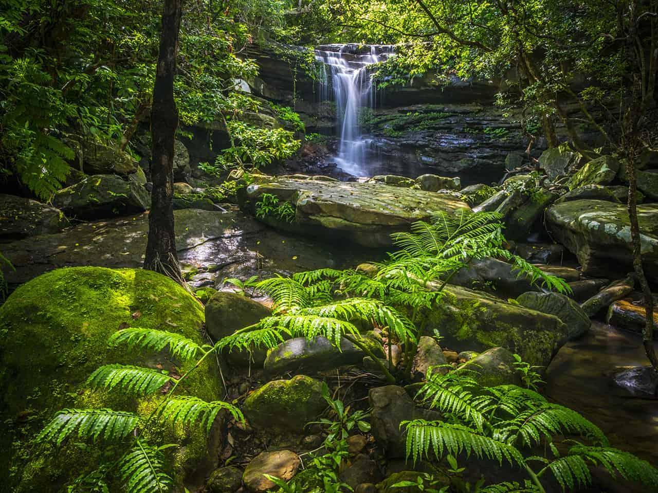 Die tropische Vegetation auf Okinawa.