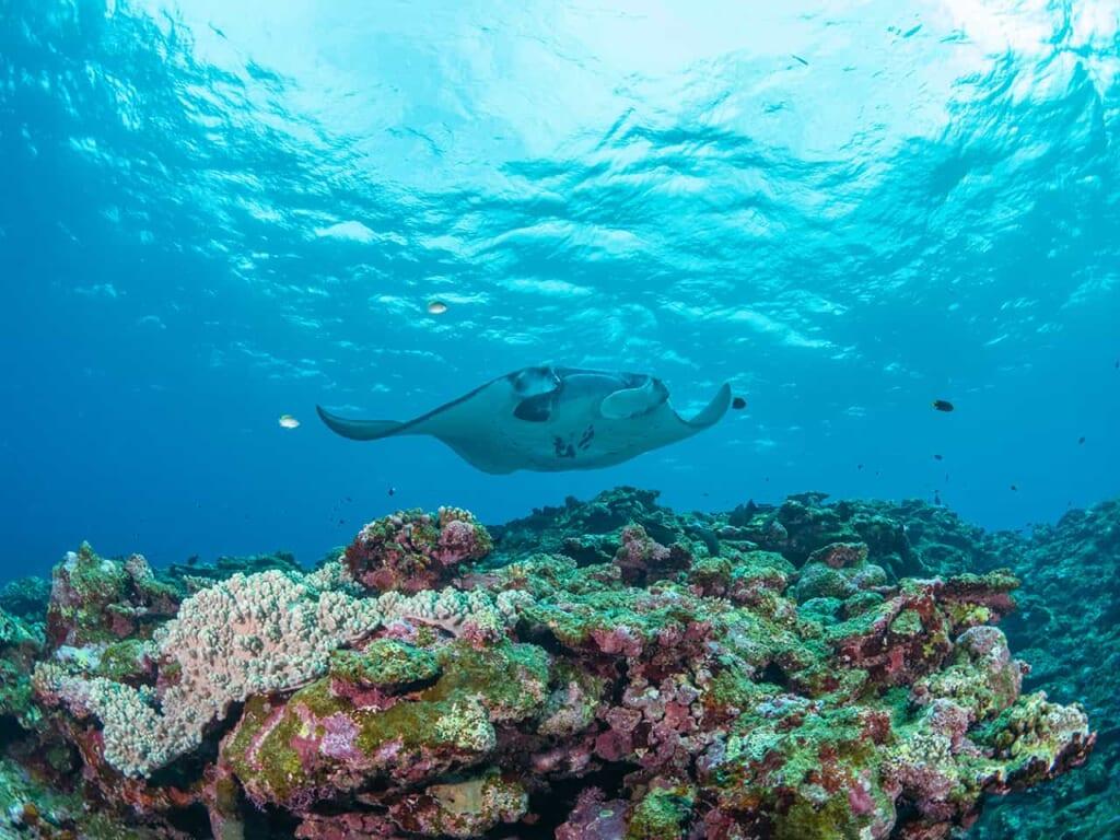 Die Unterwasserwelt von Okinawa.