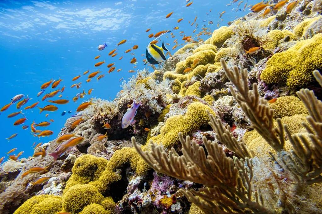Okinawa gilt als Taucherparadies mit seinen Riffen.