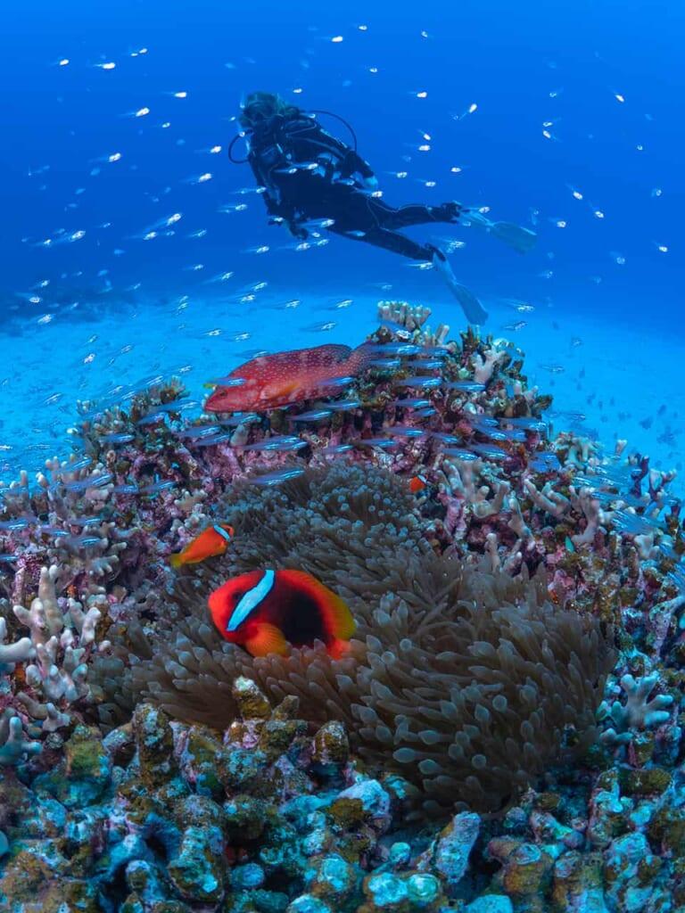 Erkundet bei einem Tauchgang die Unterwasserwelt von Okinawa.