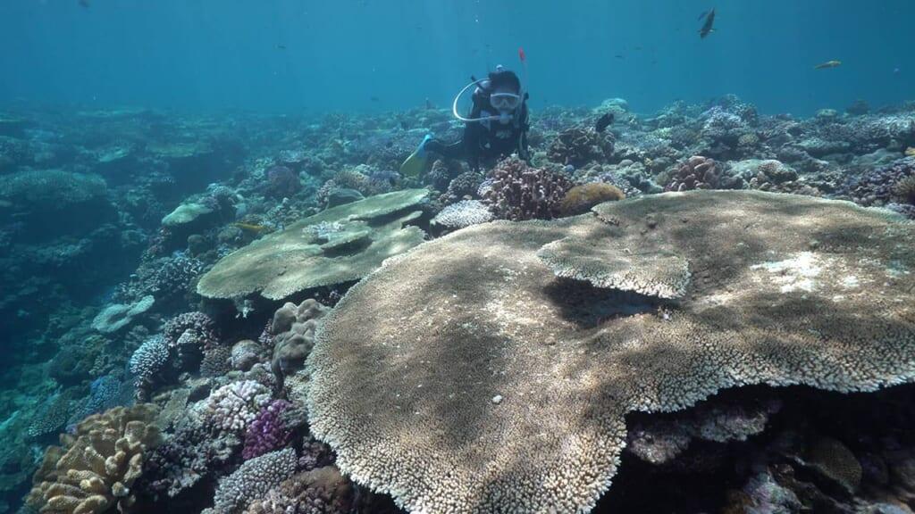 Das Korallenriff im Dorf Onna auf Okinawa, Japan.
