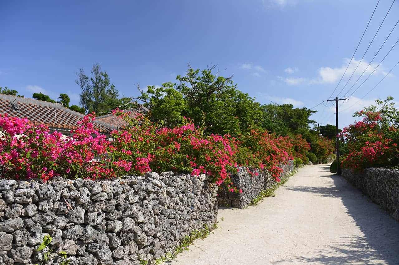 Die beeindruckende Flora und Faune, die durch verantwortungsbewusstes Reisen erhalten bleibt.