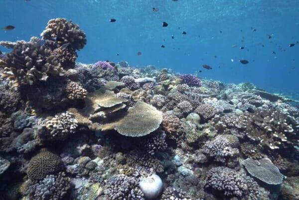Wie verantwortungsbewusste Reisende zu nachhaltigen Inseln in Okinawa beitragen können.