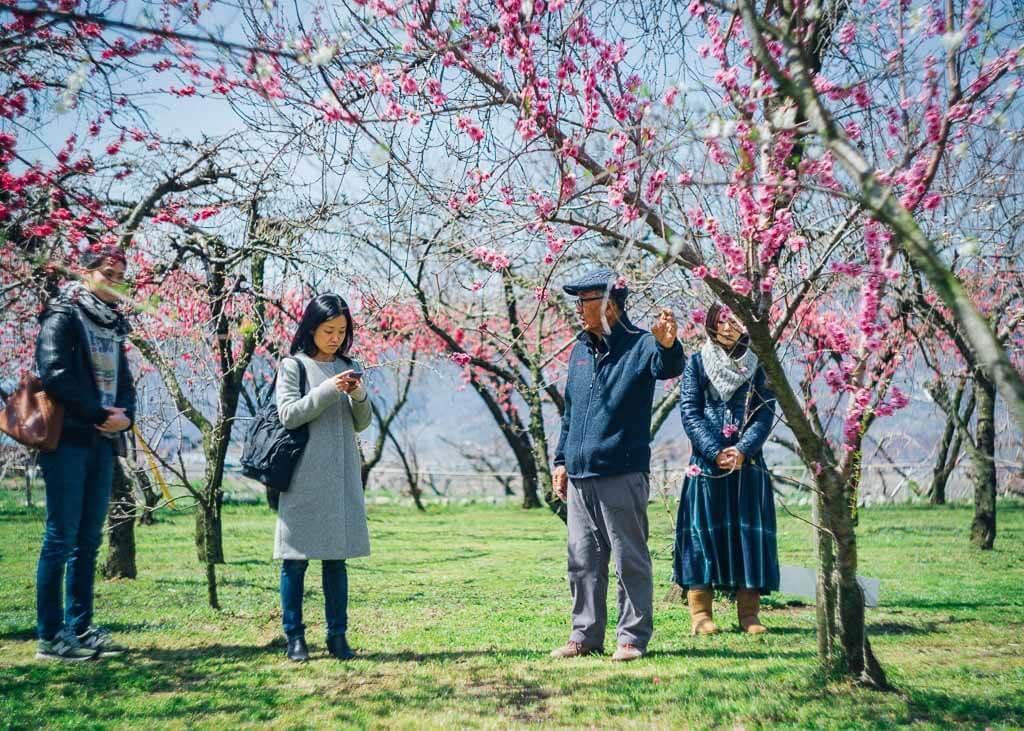 Geführte Touren durch die Pfirsichblüten in Fuefuki.