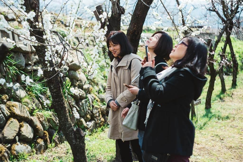 Geführte Touren auf der Farm  Marukita Hanamomo-en während der Zeit der Pfirsichtblüten.