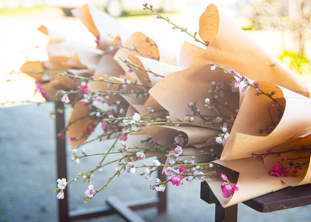 Frisch geschnittene Stängel der Pfirsichblüten.