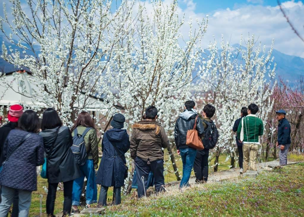 Besucher auf der Farm Marukita Hanamomo-en in Fuefuki, Präfektur Yamanashi.