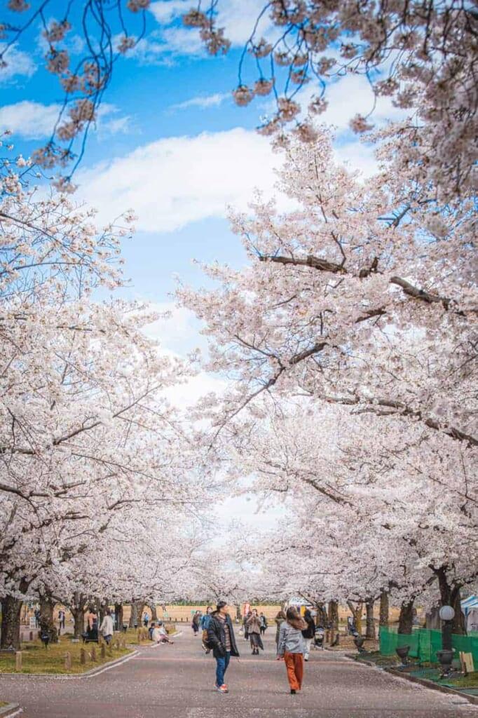 Sakura in Osaka.