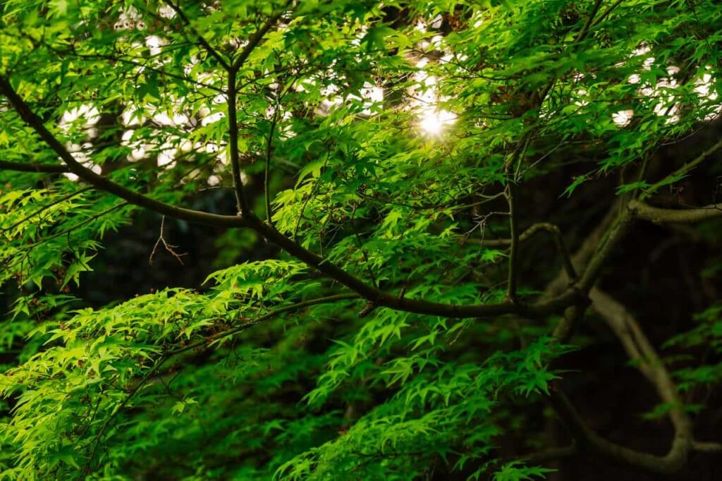 Die ruhige Umgebung des Shointei bei der Burg Hamamatsu.