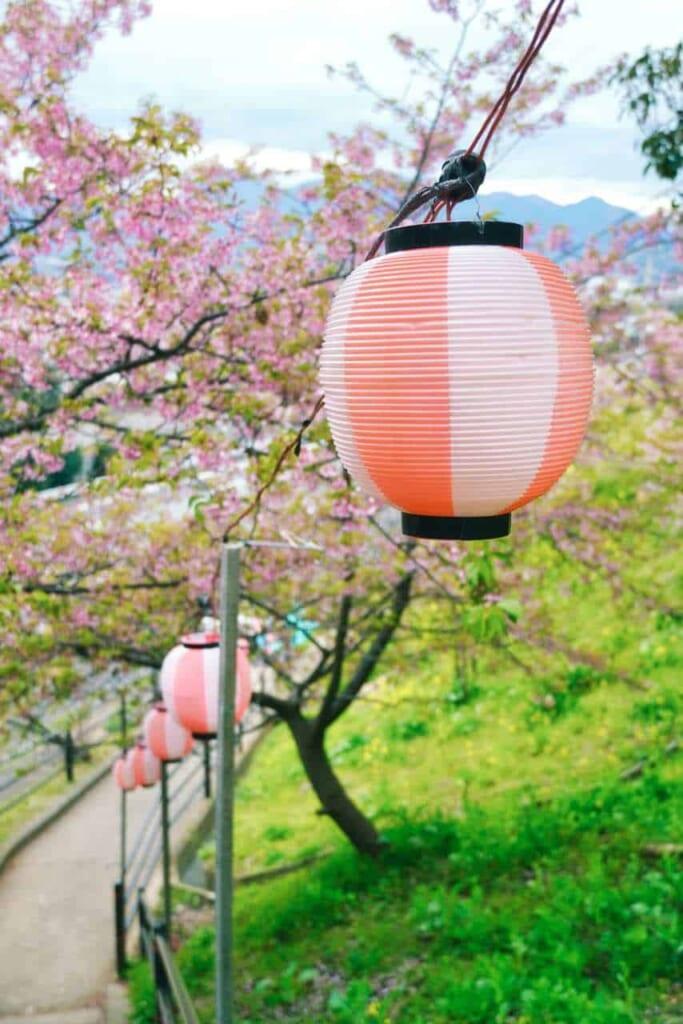 Laterne auf dem Matsuda Kirschblütenfest.