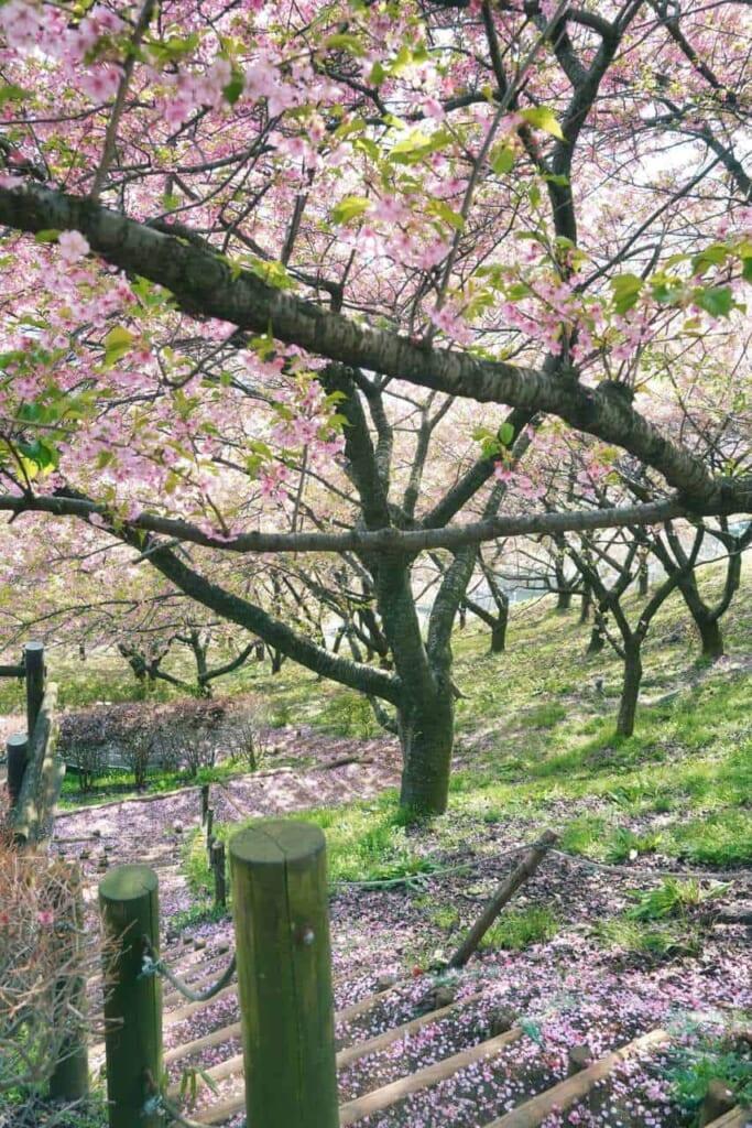 Kirschblütenblätter auf einer Treppe.
