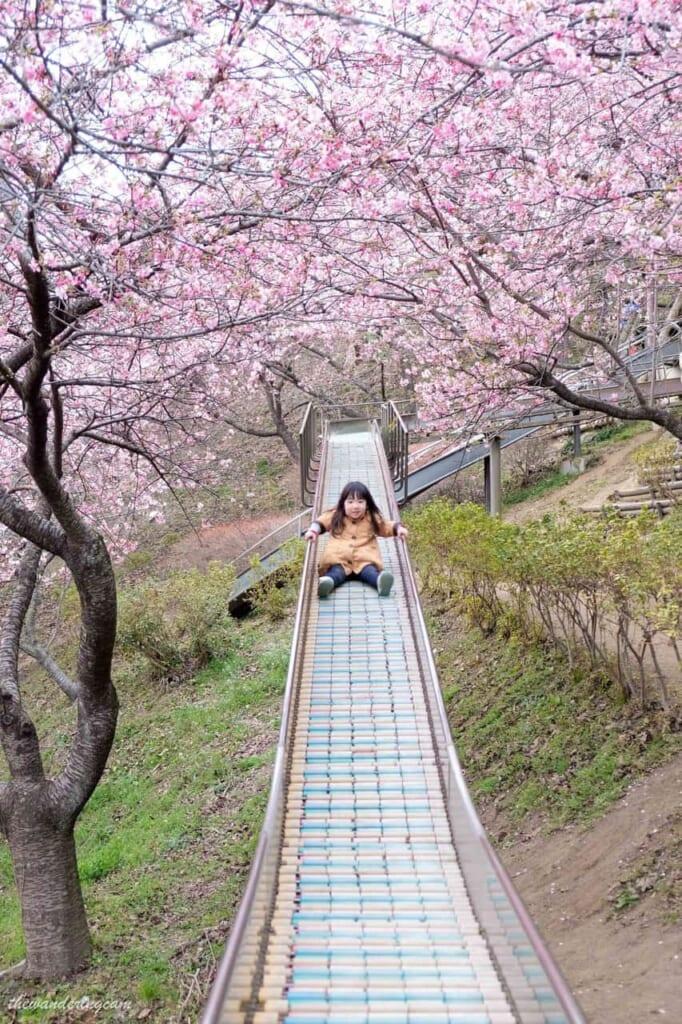 Eine Rutsche umgeben von Kirschblütenbäumen.