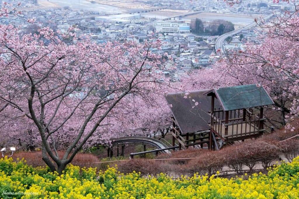 Blick auf die Stadt Matsuda mit Kirsch- und Rapsblüten, Präfektur Kanagawa.