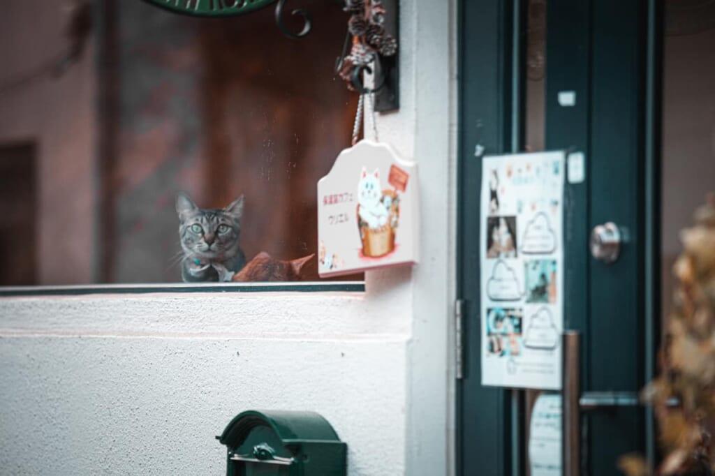 Un gatto osserva dalla vetrata del Cafe Uriel