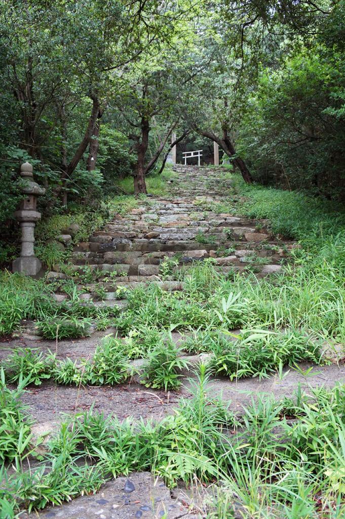 Gradini coperti di vegetazione che portano a un portale torii