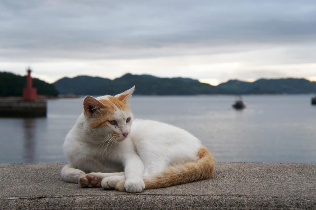 Un gatto bianco e rosso con il mare sullo sfondo