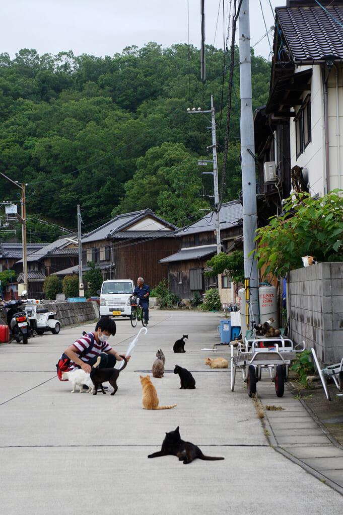Una strada con molti gatti e una persona che li accarezza