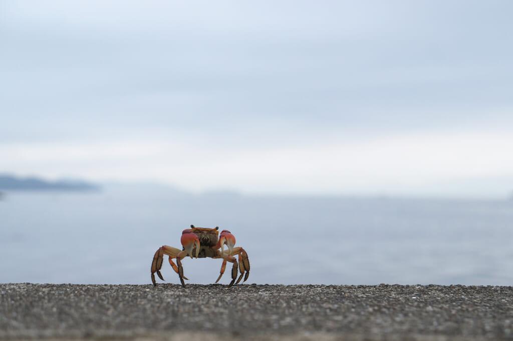 Un granchio con il mare sullo sfondo