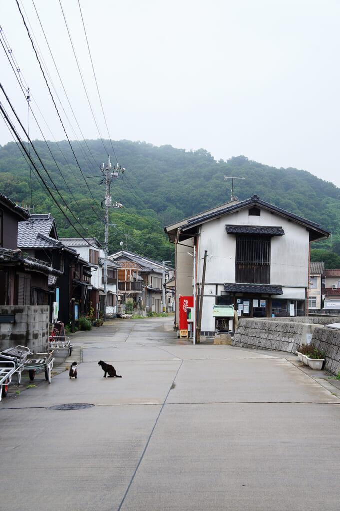 Una strada con due gatti