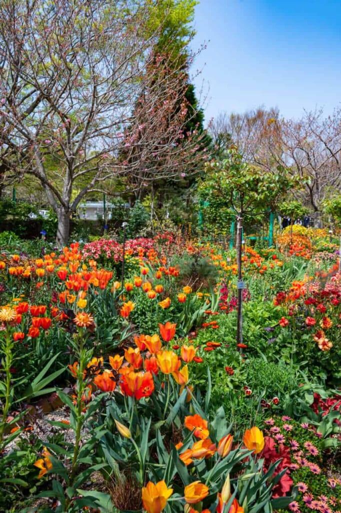 Fiori allo Hamanako Garden Park di Hamamatsu
